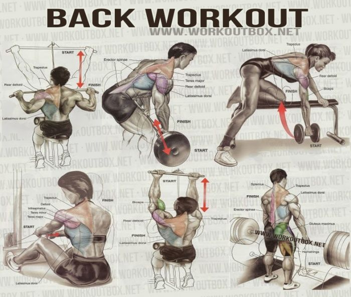 Tune1st A Free Online Resource Fitness Fitness Guidance Back Exercices Lower And Upper Back